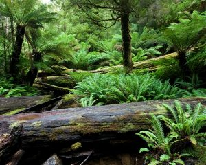 The impact of land plants on Earth's climate and oxygenation state